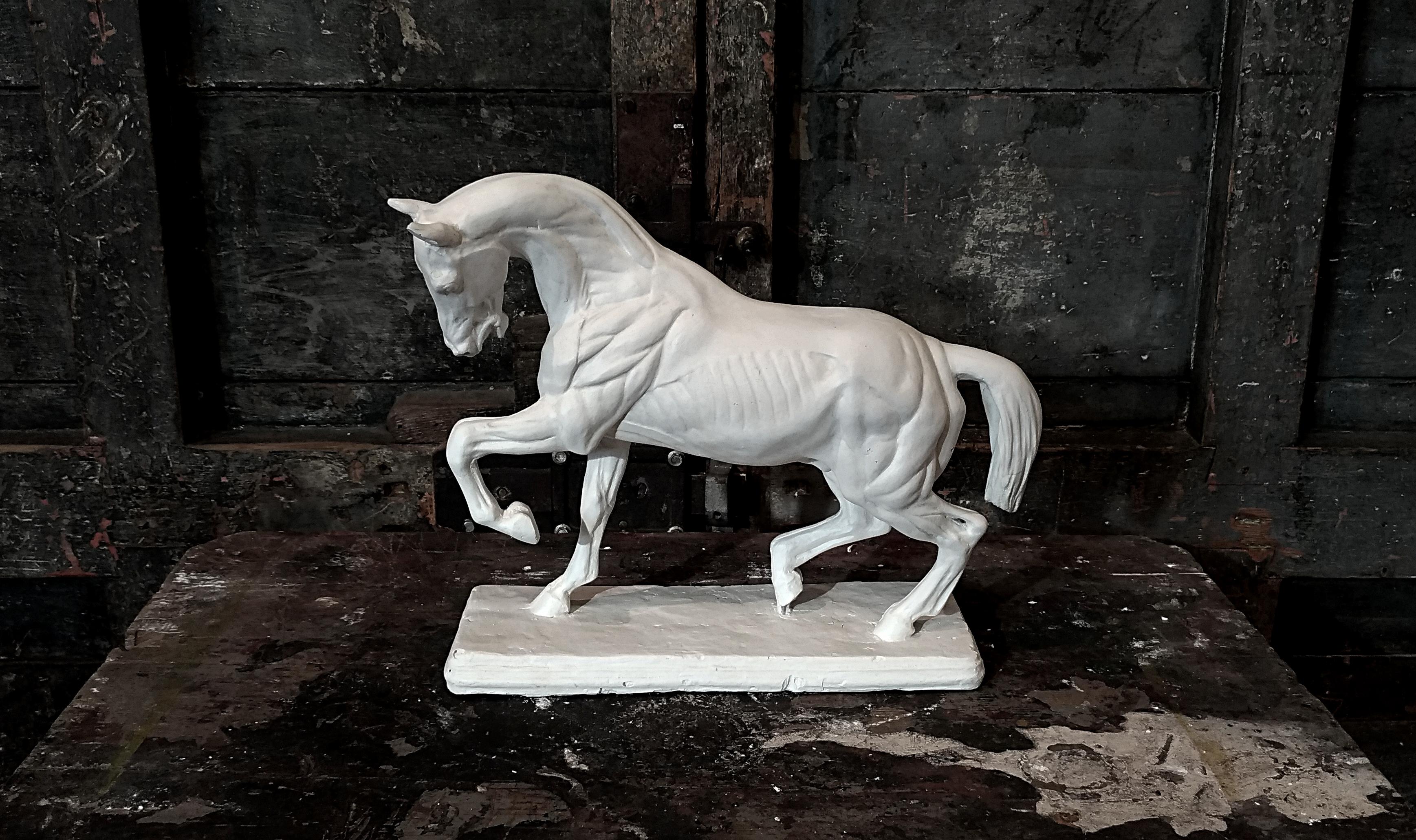 Cavallo studio Leonardo Image