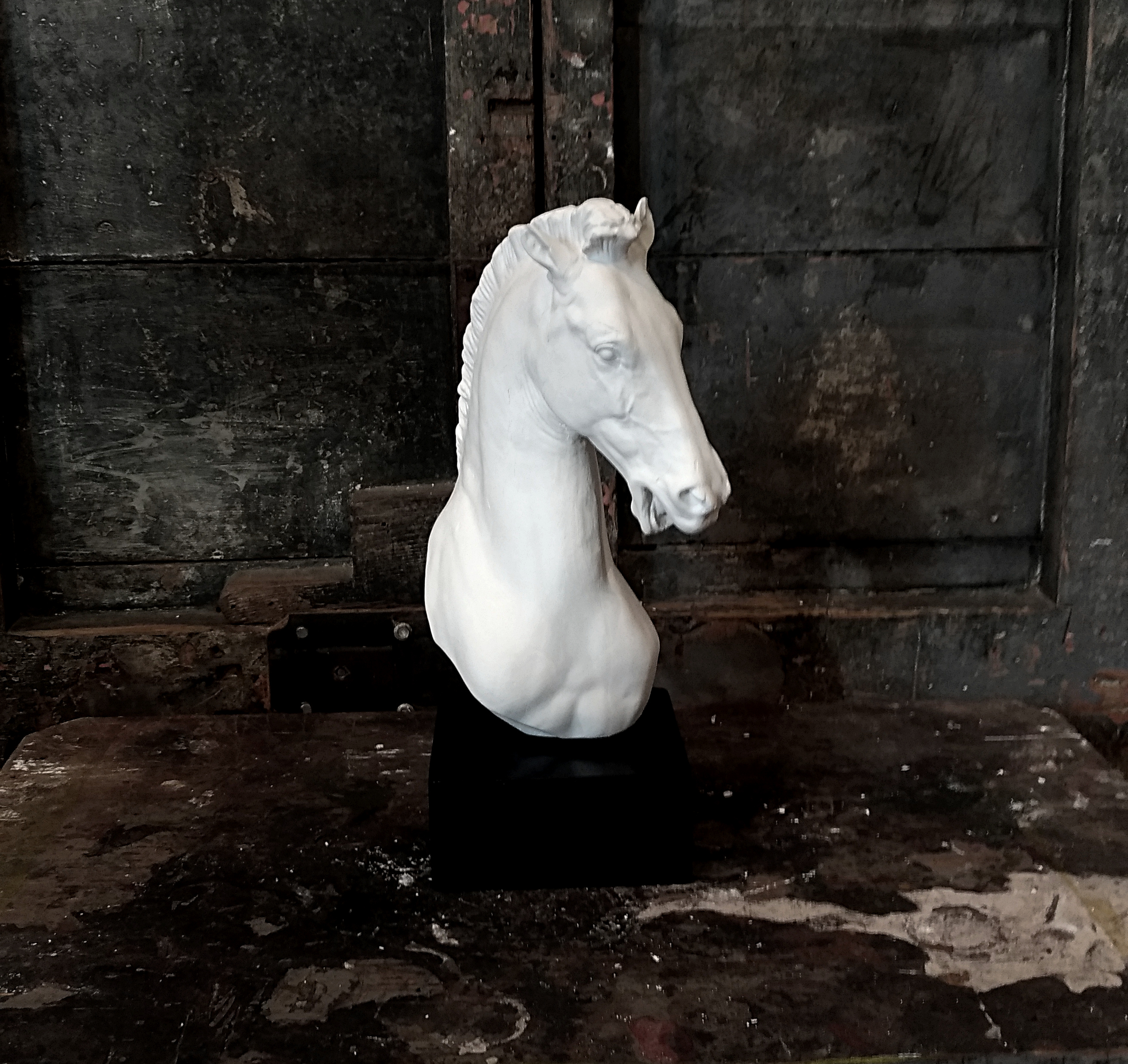 Testa di cavallo Image