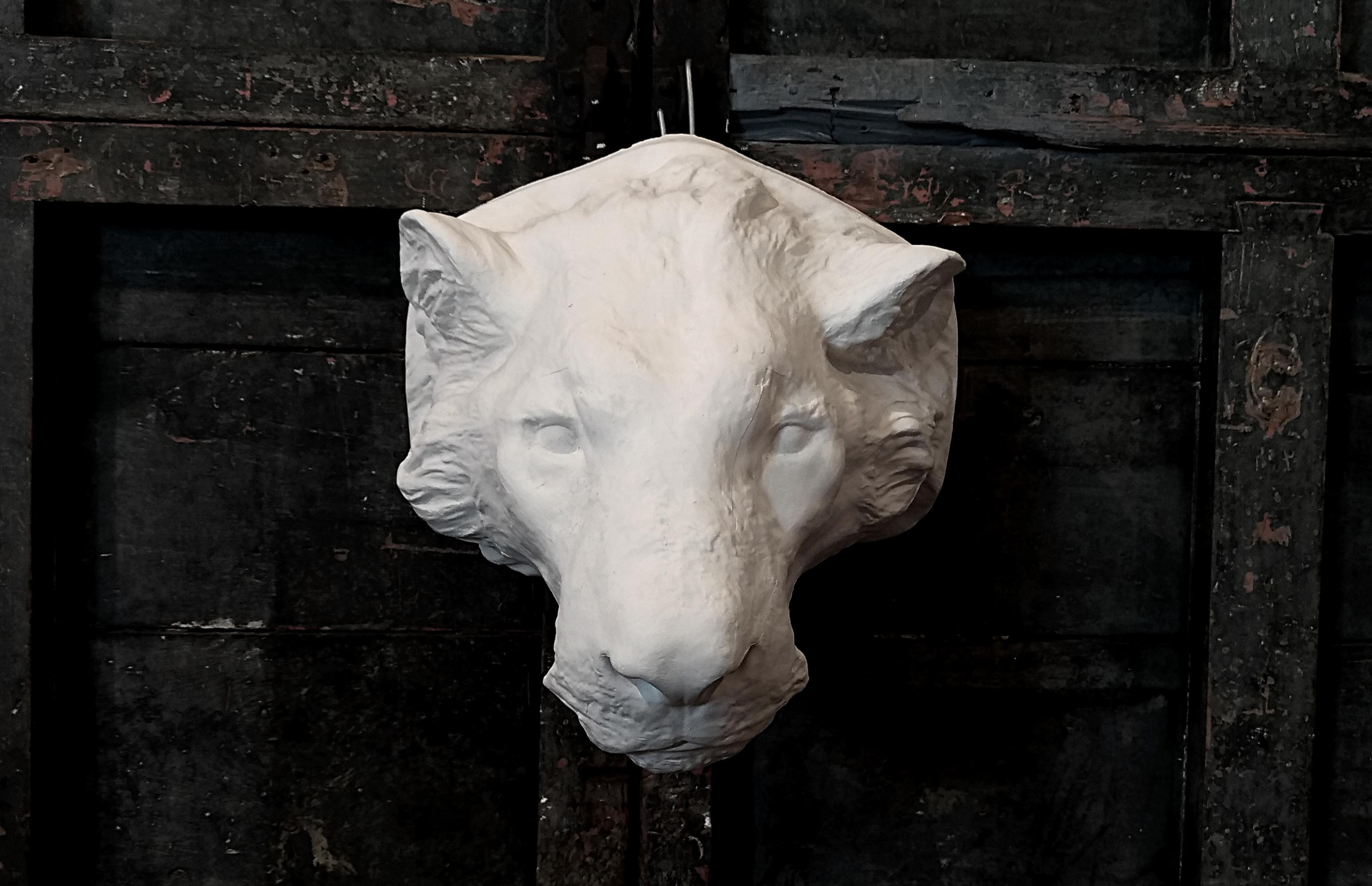 Testa di leone Image